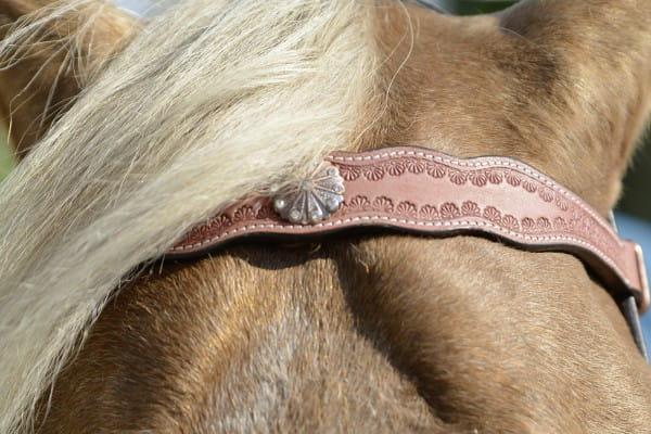 Kopfstück UTAH, mit Zügeln © BUSSE GmbH