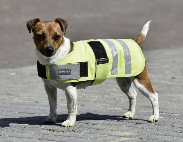Hundedecke SHINE © BUSSE GmbH