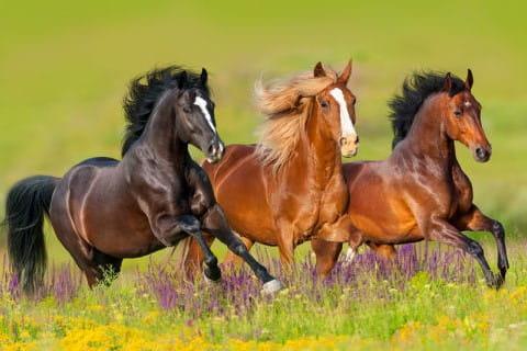 anweiden-pferd-hufrehe-durchfallICQcXA2xlySob