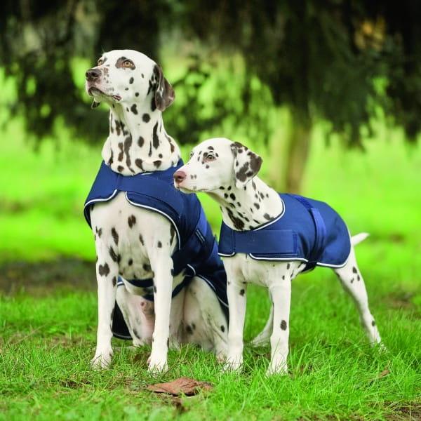 Hunde Regendecke